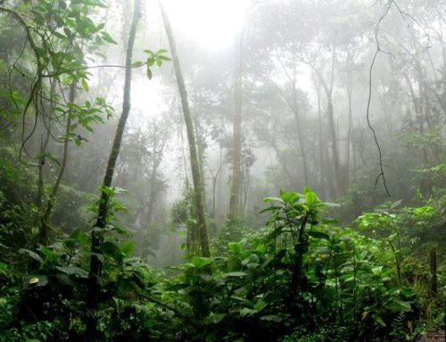 How Rainforests Talk (2019-21)